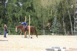 Pferdelimbo