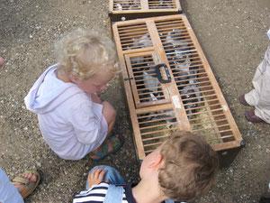 Sowohl die Menschen als auch die Tauben sind neugierig.