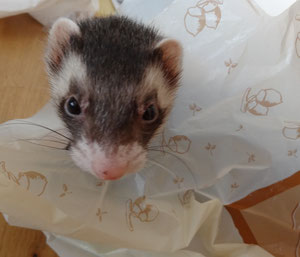 袋の中が好き。