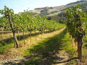 villa, raggi, coltivazione, vitivinicola, produzione, vini, genuinità, gusto, azienda, farm