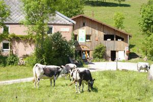 notre fromage est 100% au lait de vaches vosgiennes