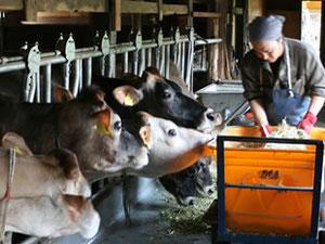 元気な牛さん達は食欲も旺盛です。