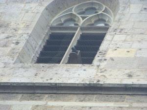 Dohlen und Turmfalken nisten in den Türmen der Johanneskirche