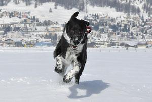 Ausflug nach Samedan (St. Moritz) 8.1.2012