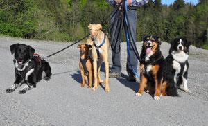 Letzter Samstagsspaziergang mit Pflegehund Mary