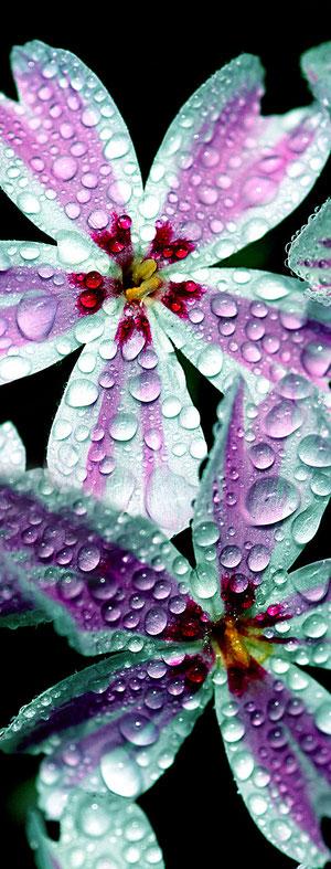 mit Regentropfen