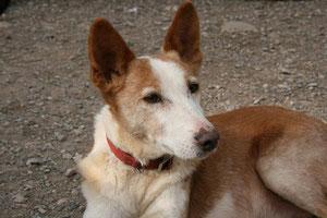 Luisito wurde von seiner spanischen Pflegefamilie adoptiert.