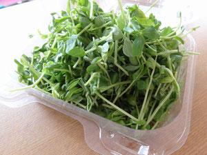 豆苗(Pea Sprouts)