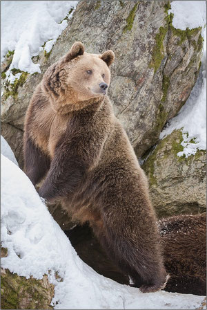 Bärenmutter