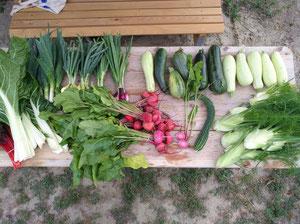 Verkaufstisch mit Gemüse in der Gärtnerei