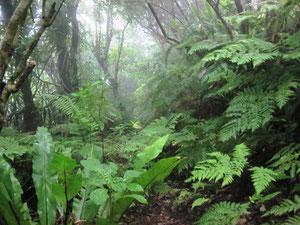 雨で生き生きするシダ植物