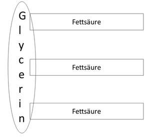Fett aus Gylcerin und Fettsäuren