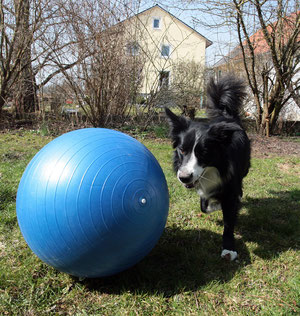 Das neuste Hobby: Treibball
