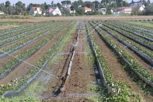 Bewässerung (NABU Verbandsnetz)