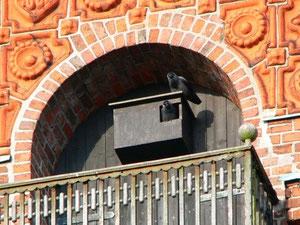 Dohlennistkasten  (Foto: NABU Verbandsnetz)
