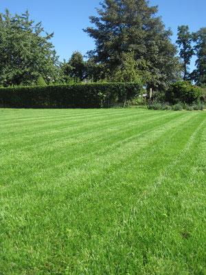 création entretien gazon pelouse