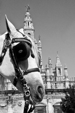 Giralda para alguns/ Sevilla