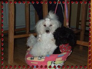 Molly & Emma in meiner ersten Bauchtasche