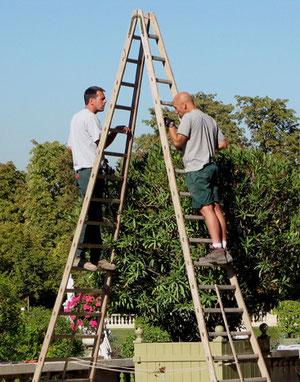 Un duo d'acrobates? Non ! Des jardiniers pour la coupe automnale des arbres du jardin du Luxembourg (M. Depecker)