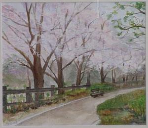 公園の桜 10号 水彩