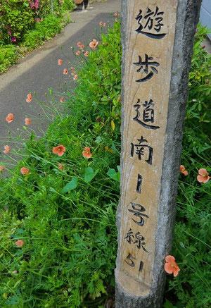 小金井市と三鷹市の境界線にもなっている道を連雀通りから北へ自転車でゆっくりと走る
