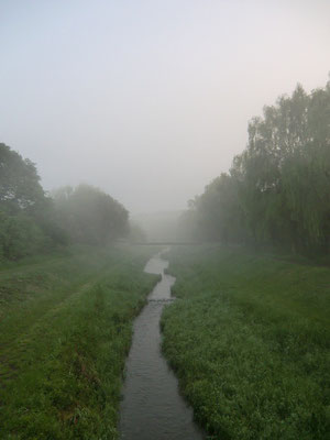 ▲朝靄の野川