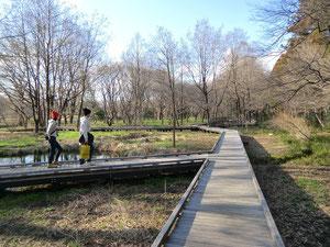 ●木道の上を歩いて散策できます