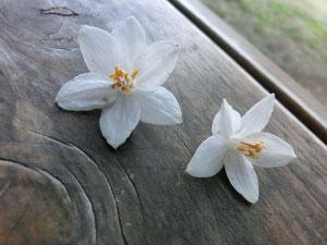 ▲花びらを拾い撮影