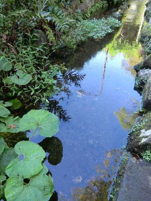 むさしの 深大寺の湧水の流れ