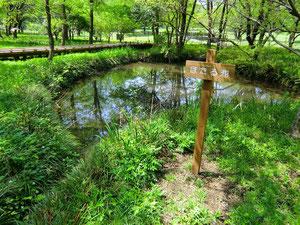 ▲自然観察園内のホタル池