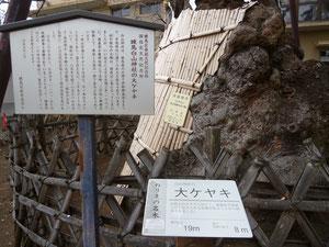 国指定天然記念物