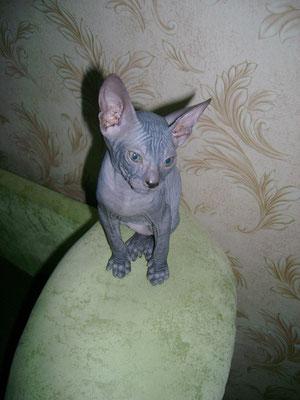 мой котенок в детстве