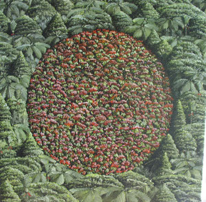 Crop circle III, 400 x400mm,oil on canvas.