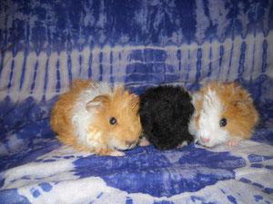 Babys von Aristoteles (Daisy, Dusty und Daydream)