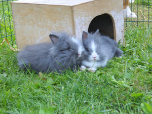 Zira und Lilly