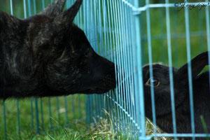 Ilex schließt Freundschaft mit Blacky