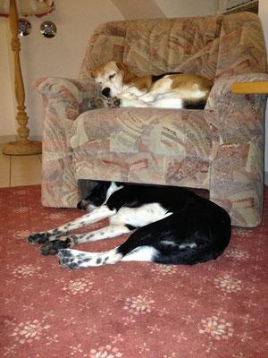 Leon & Millie abends an der b.a.c.k. in der Ferienwohnung