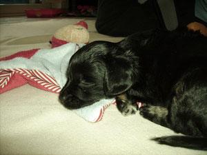 Das Julchen ist ein prima Kissen