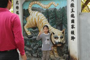 顔にイタズラ書きされているように見える虎。