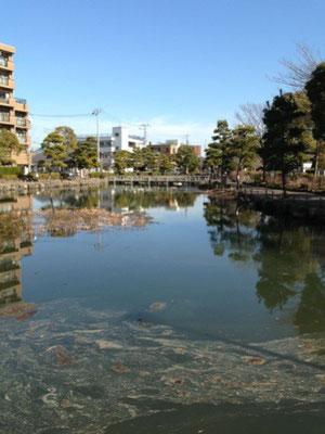 近所の池。水が汚い。。。