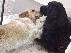 Chessy und Braxton mögen sich