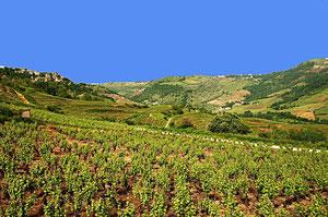Le vignoble de Marcillac chez Teulier
