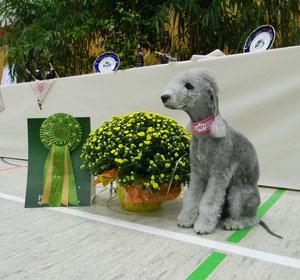 Olga jugé 3ème Excellent en Classe Champion.