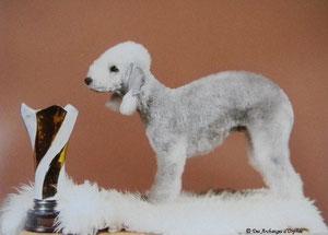 Double CH Jeune Luxembourg- Spécial Terrier- jugé par MF Cuny (France)