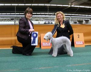 Olga jugée Meilleure de race par Mme C. Muldoon (Irlande).