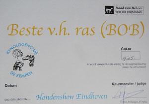 Olga jugée Meilleure de race BOB à la CACIB d'Eindhoven.