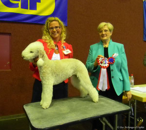 Tsarine - Championne Junior du Luxembourg jugée par Mme Gitty Schwab (Luxembourg).