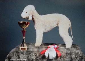 Tsarine - BOB /Meilleure de race, Meilleure Femelle et Meilleure Jeune.
