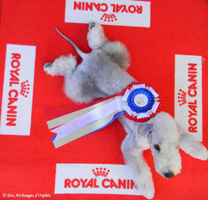 Souvenir du World dog show Paris 2011.
