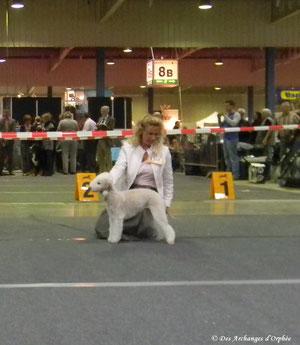 Tsarine dans le ring de la CACIB du Luxembourg.